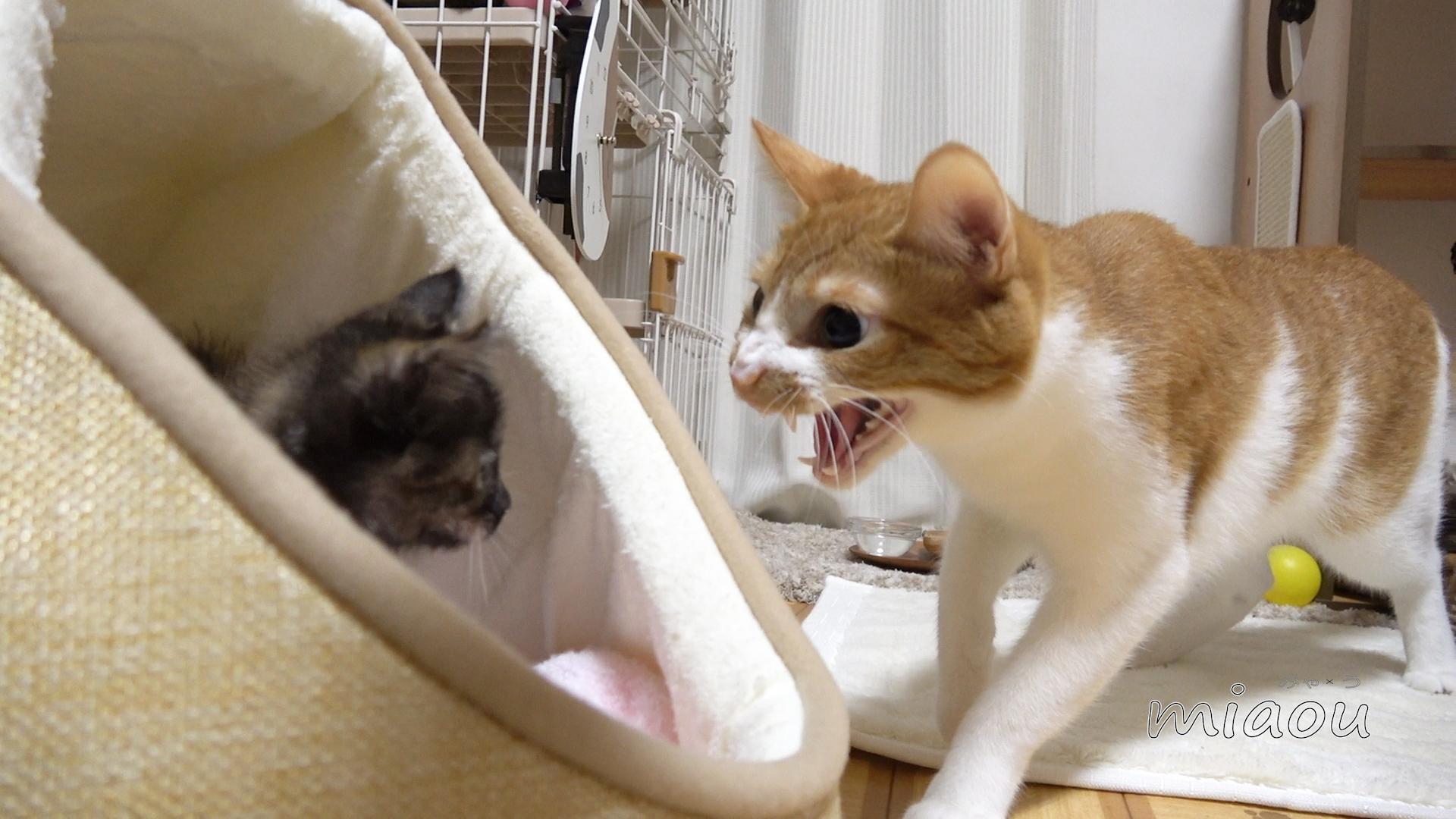 白 猫 み ゃ あこ 猫の柄・毛色は24種類!模様によって性格がちがうって本当?