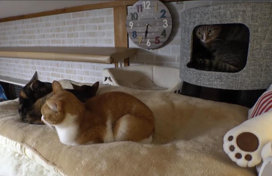 白 猫 み ゃ あこ 専門家監修:黒×白の猫を徹底解説!